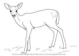 learn how to draw a baby deer aka fawn zoo animals step by step