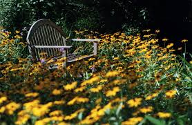 houston native plants native flowers are good for the environment u2014 and less work for