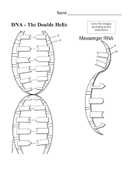 dna and rna worksheet free worksheets library download and print