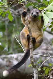 native queensland plants 31 best australian animals images on pinterest australian