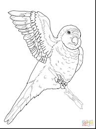 coloring parrot printable printable parrot stencil free