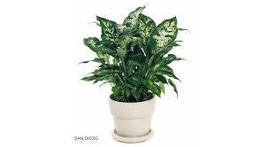 plantes dans la chambre plantes pour la chambre plantes dépolluantes