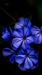 Blue Flower Backgrounds - 90 best flower phone wallpaper images on pinterest wallpapers