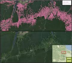 Interactive Map Global Forest Watch by Roads Through The Rainforest An Overview Of South America U0027s U0027arc