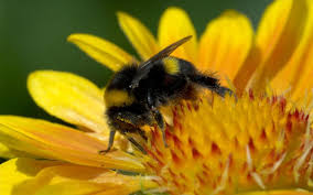 Flowers Bees Pollinate - how to attract bees to your garden the telegraph