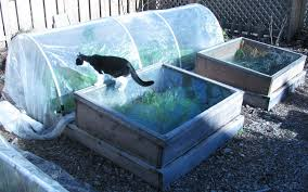 winter vegetable garden are you planning for one this winter