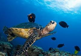 imágenes asombrosas naturaleza naturaleza asombrosa las tortugas de mike roberts album de fotos