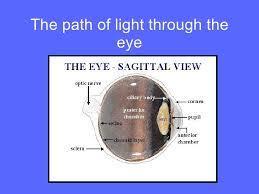 Pathway Of Light Through The Eye Special Senses