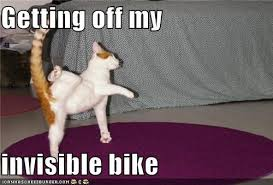 Invisible Cat Meme - i can has cheezburger invisible bike funny animals online