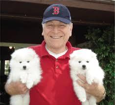 american eskimo dog for sale in colorado toy american eskimo dogs and puppies for sale
