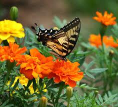butterfly plants for preschoolers preschool powol packets