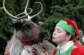 for kids of all ages here is santa u0027s reindeer cam live