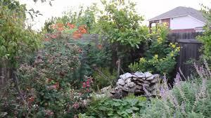 lisa u0027s landscape and design drought tolerant plants part 1 youtube