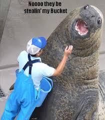 Walrus Meme - lolrus know your meme