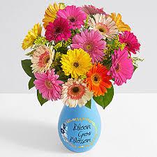 gerbera plant colorful gerbera daisies