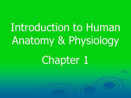 Human Anatomy And Physiology Chapter 1 Chapter 1 Introduction To Human Anatomy U0026 Physiology Ppt Download