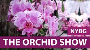 Botanical Garden Orchid Show Orchid Show 2017 New York City Botanical Gardens