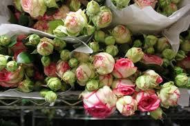 flowers nyc img 7653 500x333 jpg