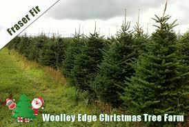 home woolley edge christmas tree farm
