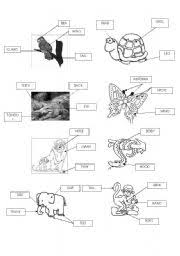 worksheet animals parts of the body