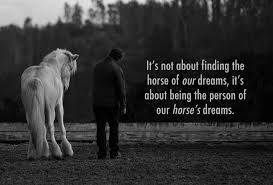 hart for horses hidden acres rescue for thoroughbreds