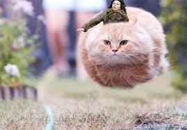 Scarlett Johansson Falling Down Meme - scarlett johansson falling down ign boards