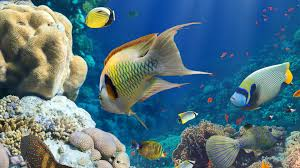 wallpaper hd marine animals underwater world fish corals