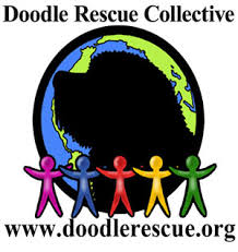 doodle for adoption indiana pets for adoption at doodle rescue collective inc in montclair