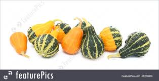 ornamental gourds stock image i5279819 at featurepics