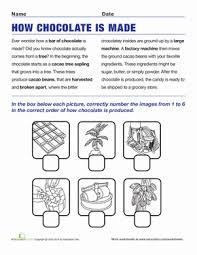 how chocolate is made comprehension worksheets worksheets and
