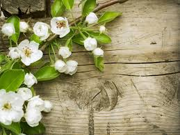 spring flowers u2013 one hd wallpaper pictures backgrounds free download