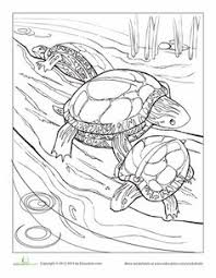 coloring pages math worksheets turtle color code math worksheet grade 2 math review