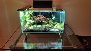 Fluval Edge Aquascape Fluval Edge 6 Gallon Is This Too Much Light The Planted Tank