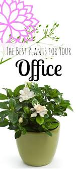Best Plant For Office Desk Best Plants For A Healthy Office Gardenias Plants And Office Spaces