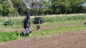 uatre nueva escala salarial para los trabajadores agrarios aumento del 22 para peones rurales con bono de fin de año de 2 500