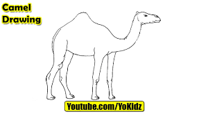 how to draw camel for kids youtube