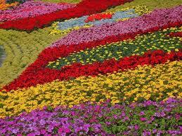 105 best epcot flower show images on pinterest epcot flower