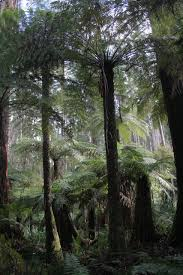 5 Dominant Plants In The Tropical Rainforest Fern Fossil Data Clarifies Origination And Extinction Of Species