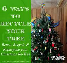 6 ways to recycle your tree recycle reuse repurpose the