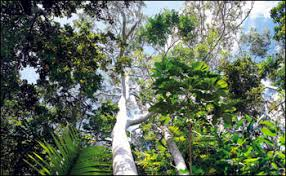 canopy amazon escape from the amazon feature articles
