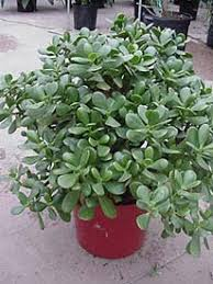great website houseplants can be looked up under botanical or