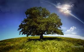 single tree in the green field widescreen wallpaper wide