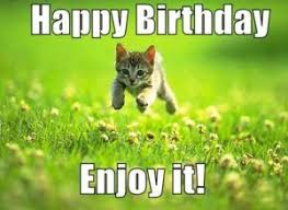 Happy Birthday Cat Memes - 56 best happy birthday cat meme images on pinterest happy birthday