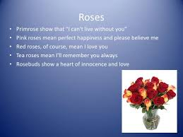 Meaning Of Pink Roses Flowers - meaning of flowers kabloom flowers