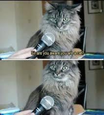 Cat Meme Funny - funny cat meme i m a cat fridge magnet 5 x 3 5 ebay