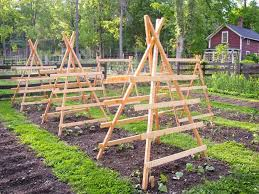 Make Your Own Cucumber Trellis Squash Pumpkin And Cucumber Trellises Ready To Be Climbed