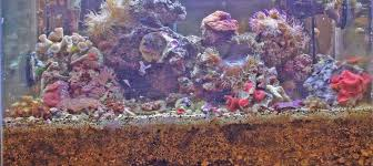 Floating Aquascape Reef2reef Saltwater And Reef Aquarium Forum - lets talk substrates for the marine aquarium reef2reef saltwater