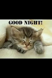 Goodnight Meme Cute - 184 best goodnight images on pinterest adorable animals good