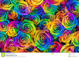 Multicolor Roses Fresh Beautiful Vibrant Multicolor Roses Flowers For Floral