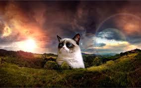 Grumpy Cat No Memes - grumpy cat clipart background pencil and in color grumpy cat